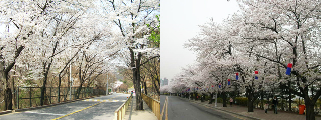 Walkerhill Road, Yunjung-no in Yeongdeungpo-gu
