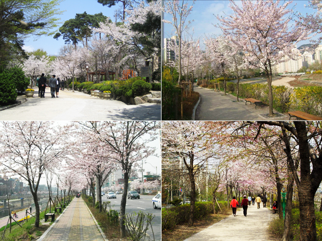 Samcheong Park in Jongno, Jeungsan-no in Eunpyeong-gu, Uicheon in Gangbuk, Danghyeoncheon-no in Nowon